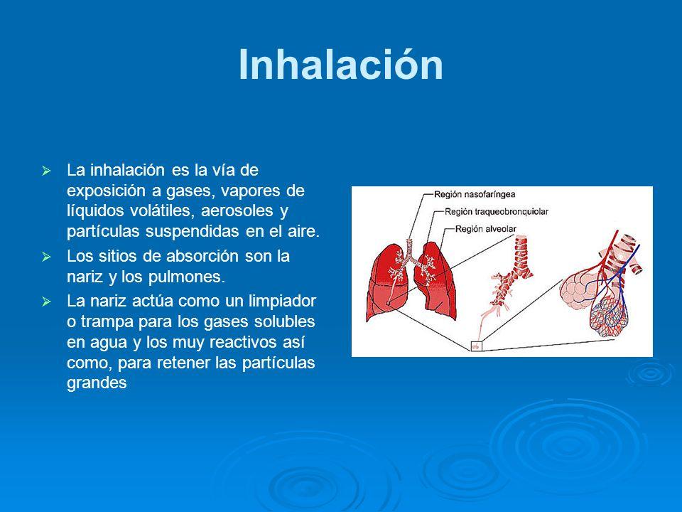 Inhalación La inhalación es la vía de exposición a gases, vapores de líquidos volátiles, aerosoles y partículas suspendidas en el aire.