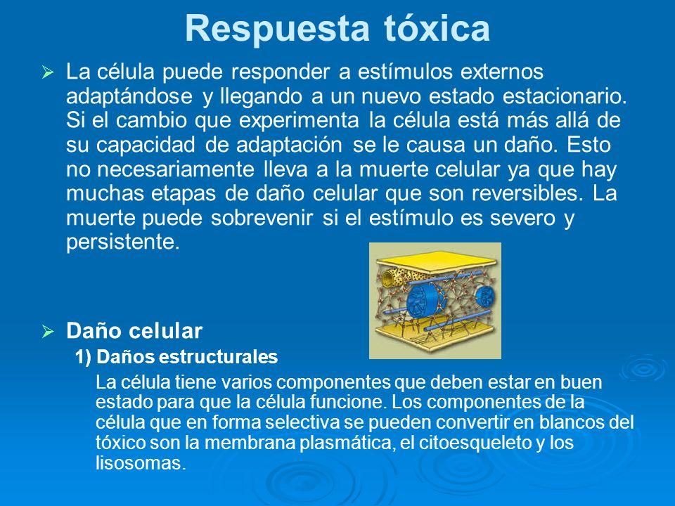 Respuesta tóxica