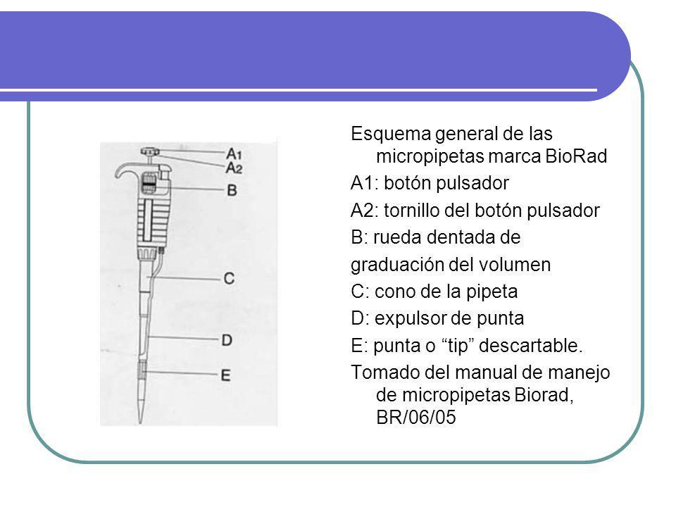 Esquema general de las micropipetas marca BioRad A1: botón pulsador A2: tornillo del botón pulsador B: rueda dentada de graduación del volumen C: cono de la pipeta D: expulsor de punta E: punta o tip descartable.