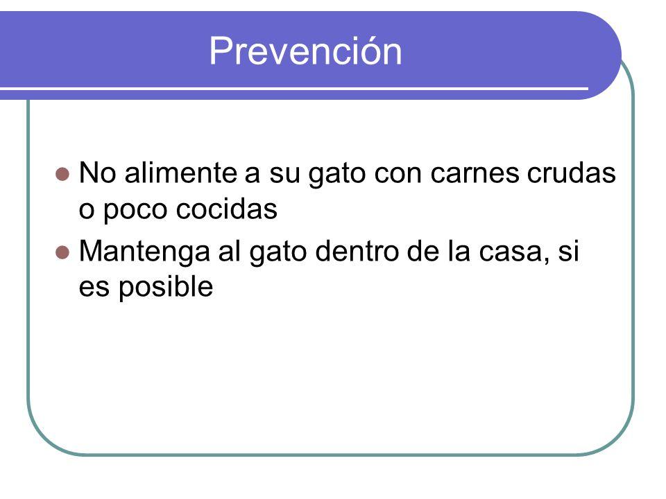 Prevención No alimente a su gato con carnes crudas o poco cocidas