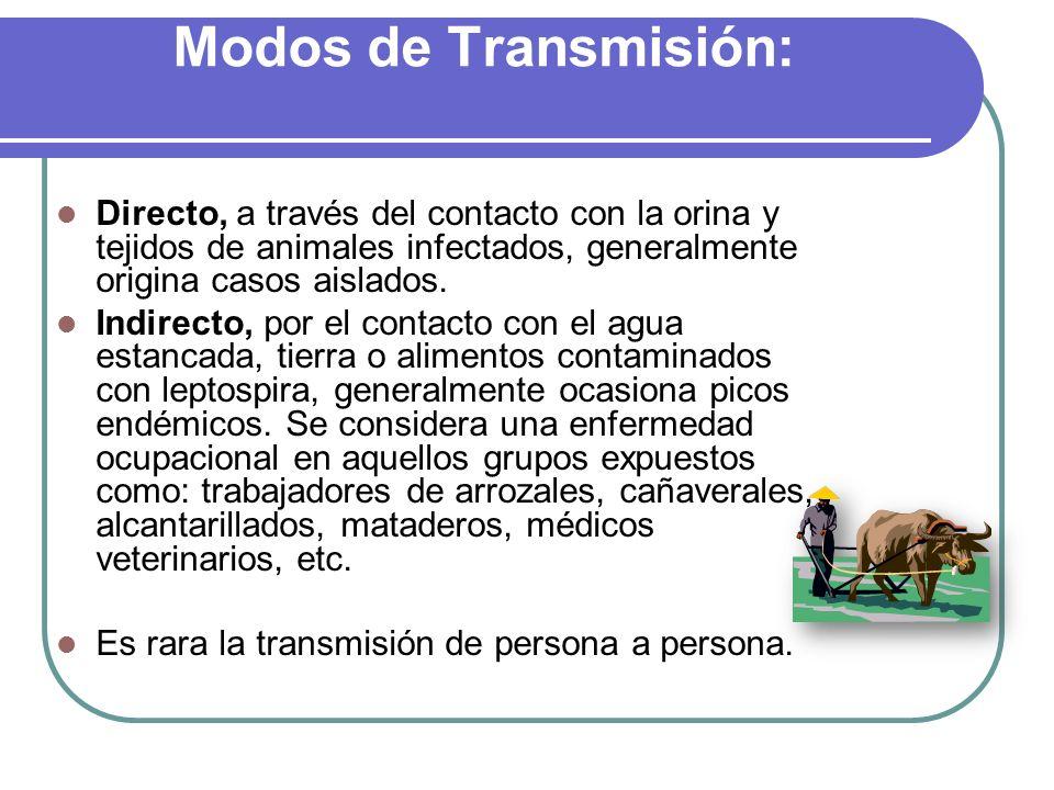 Modos de Transmisión: Directo, a través del contacto con la orina y tejidos de animales infectados, generalmente origina casos aislados.