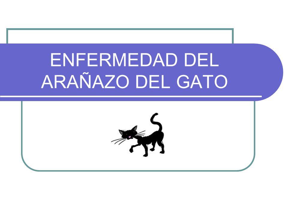 ENFERMEDAD DEL ARAÑAZO DEL GATO