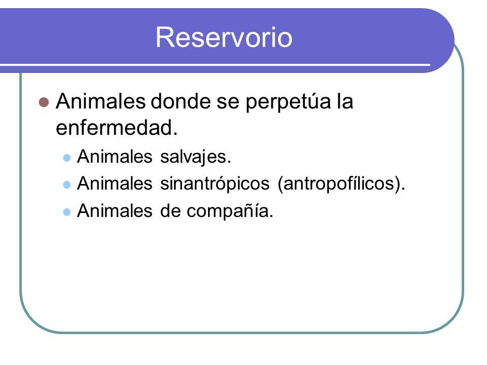 Reservorio Animales donde se perpetúa la enfermedad.