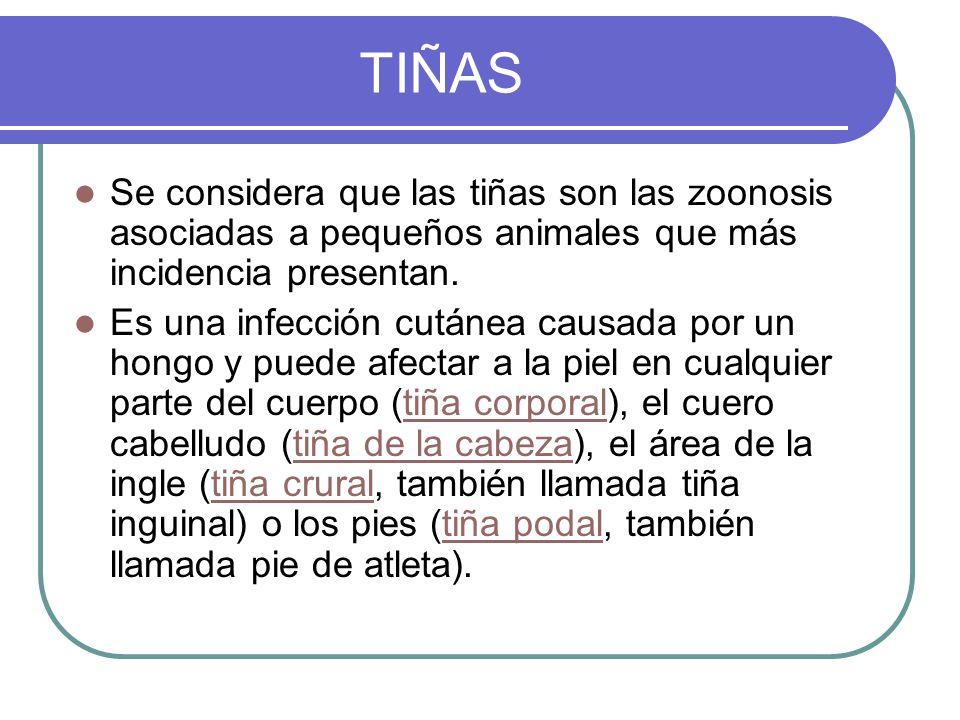 TIÑAS Se considera que las tiñas son las zoonosis asociadas a pequeños animales que más incidencia presentan.