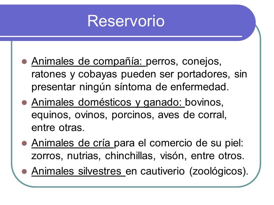 ReservorioAnimales de compañía: perros, conejos, ratones y cobayas pueden ser portadores, sin presentar ningún síntoma de enfermedad.
