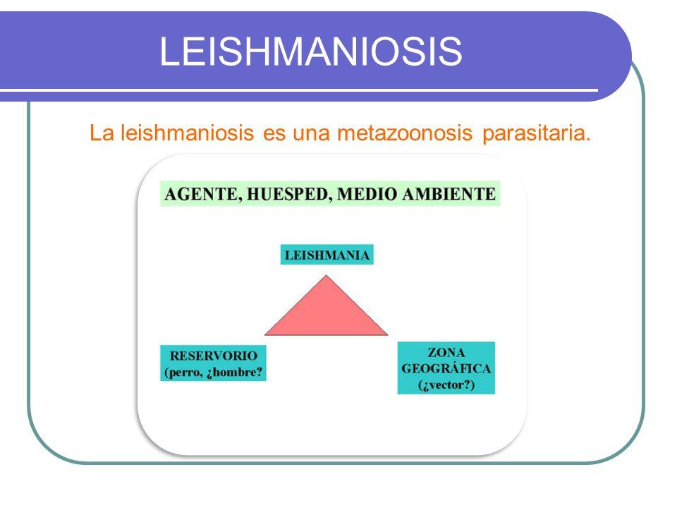 LEISHMANIOSIS La leishmaniosis es una metazoonosis parasitaria.