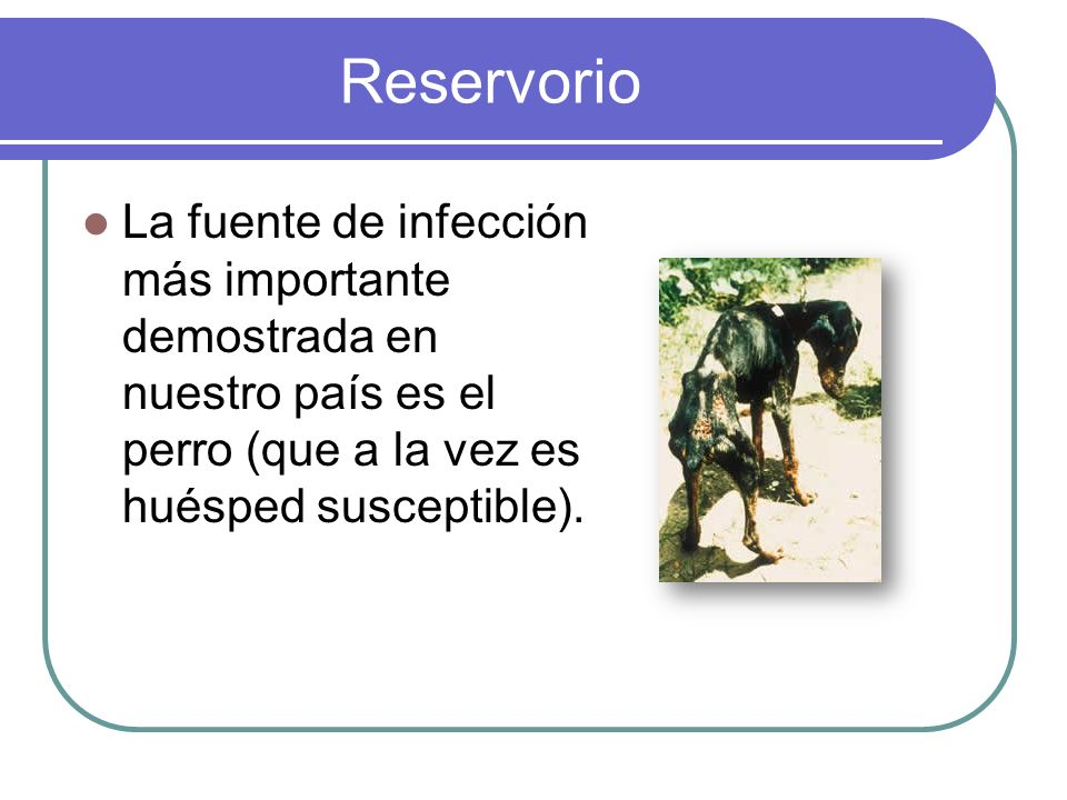 ReservorioLa fuente de infección más importante demostrada en nuestro país es el perro (que a la vez es huésped susceptible).