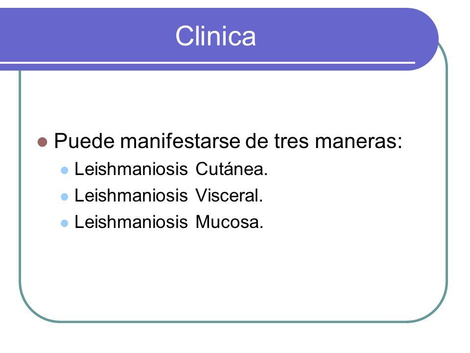 Clinica Puede manifestarse de tres maneras: Leishmaniosis Cutánea.