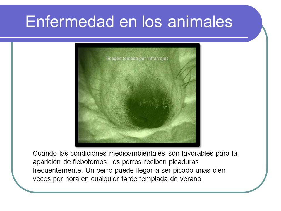 Enfermedad en los animales