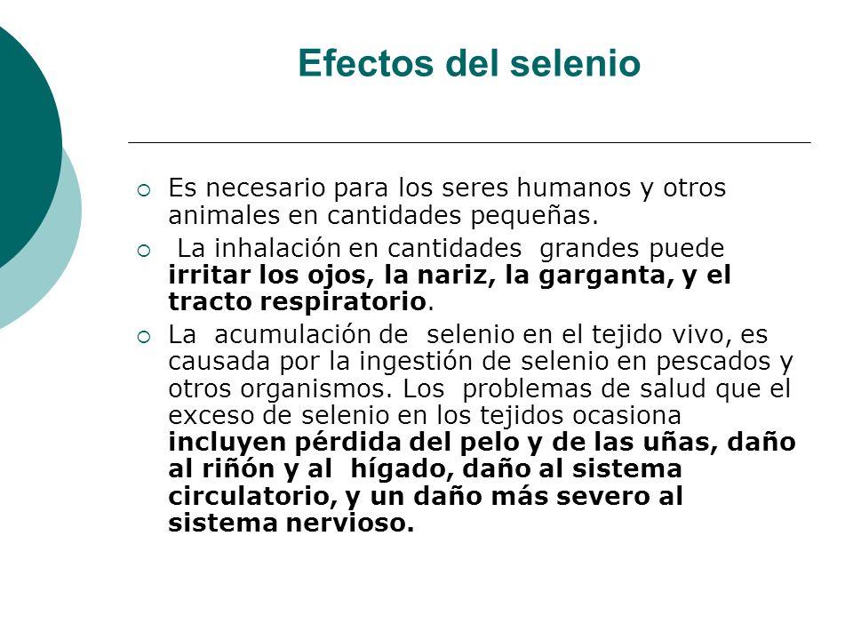 Efectos del selenioEs necesario para los seres humanos y otros animales en cantidades pequeñas.