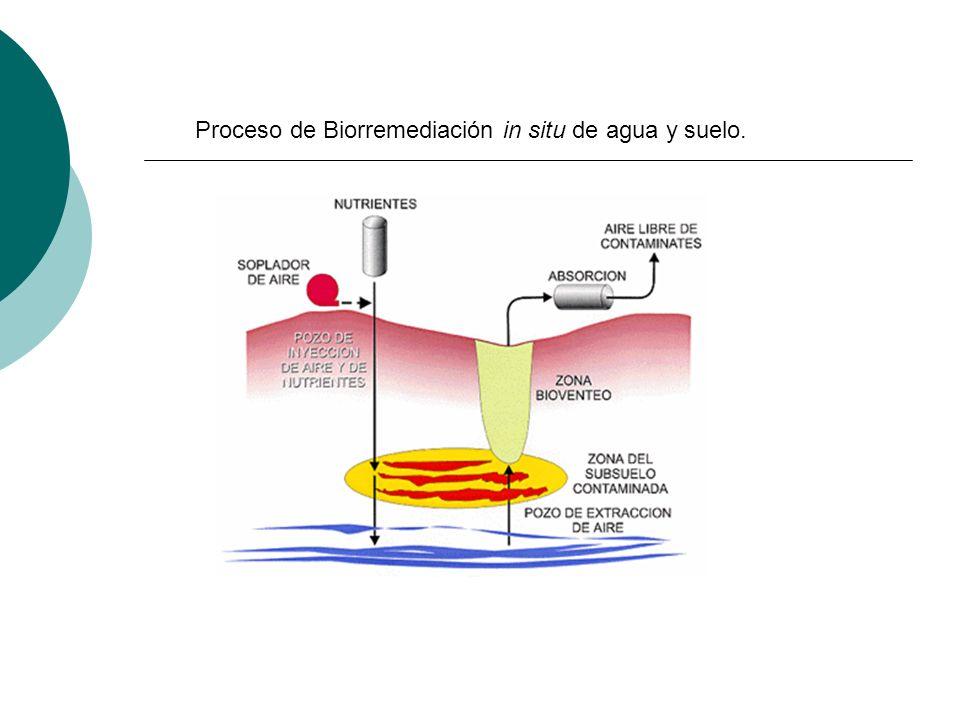 Proceso de Biorremediación in situ de agua y suelo.