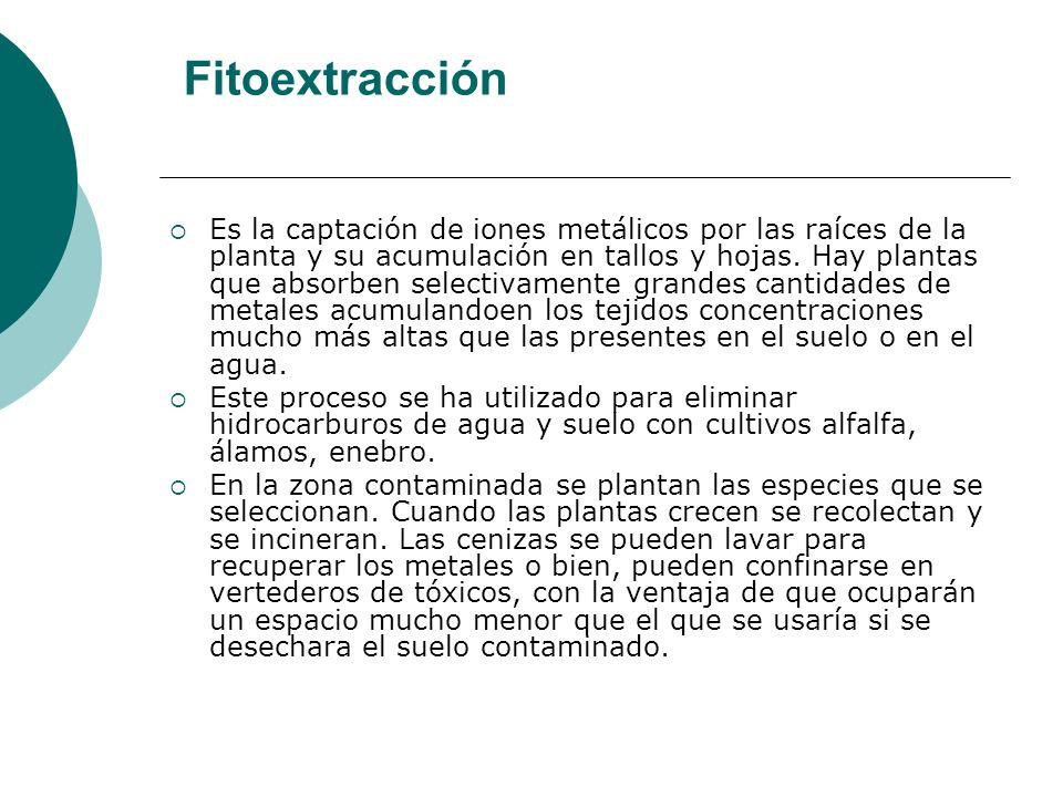 Fitoextracción