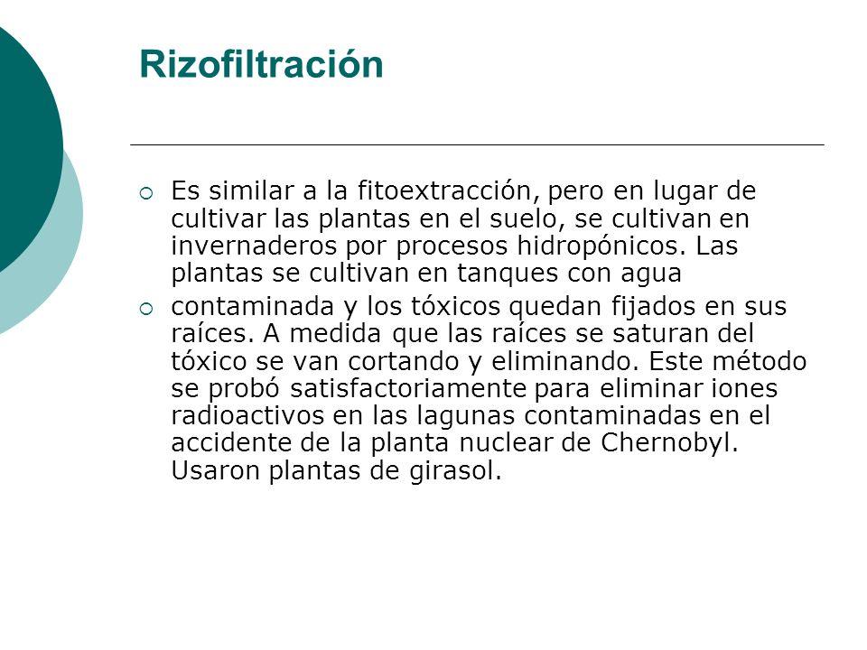 Rizofiltración