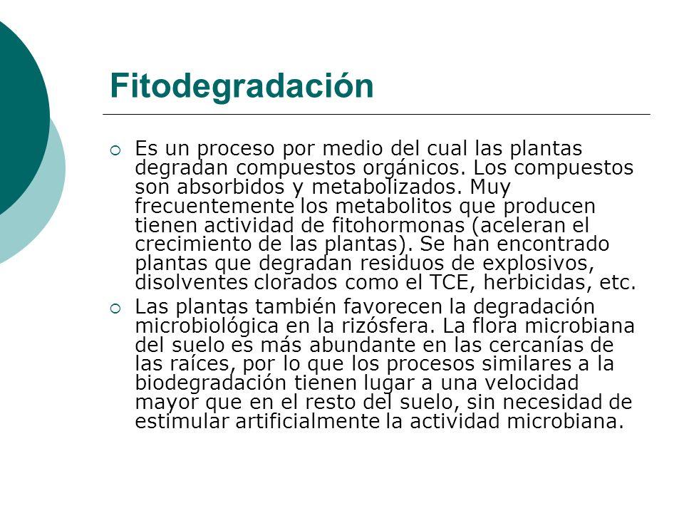 Fitodegradación