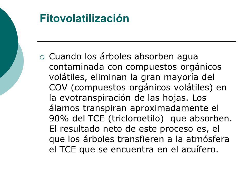 Fitovolatilización
