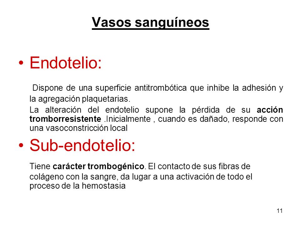 Vasos sanguíneos Endotelio: Dispone de una superficie antitrombótica que inhibe la adhesión y la agregación plaquetarias.