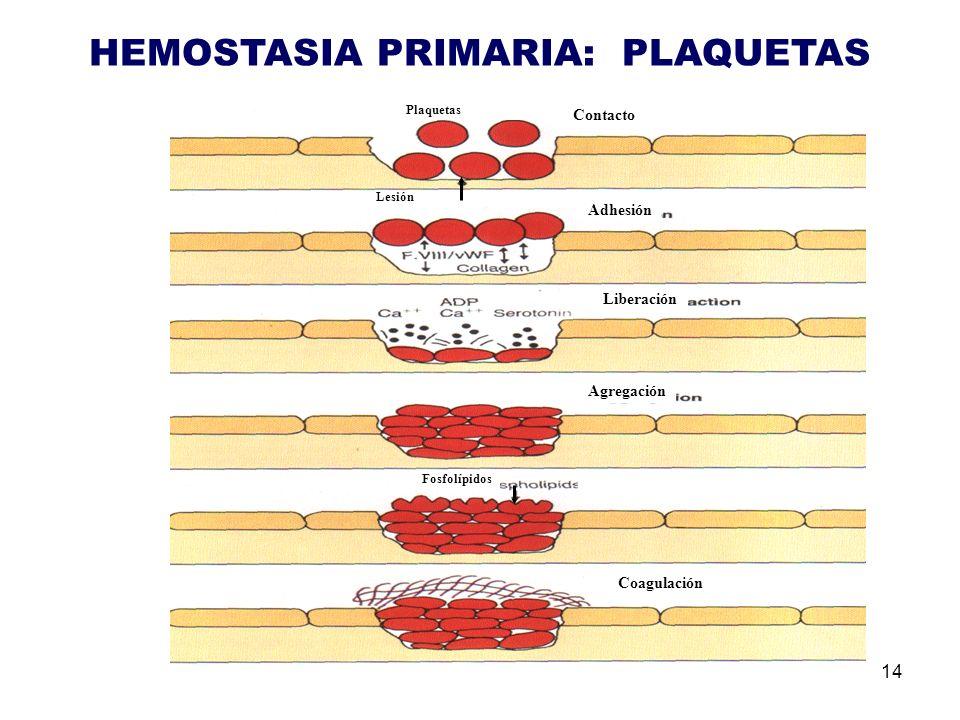 HEMOSTASIA PRIMARIA: PLAQUETAS