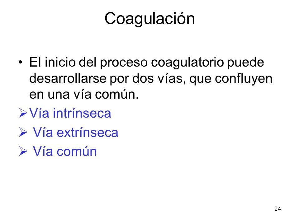 Coagulación El inicio del proceso coagulatorio puede desarrollarse por dos vías, que confluyen en una vía común.