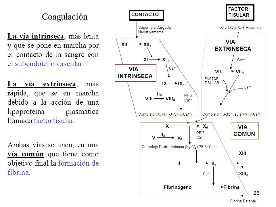 FACTOR TISULAR. VII VIIa. VIA. EXTRINSECA. Ca++ Complejo (Factor tisular+VIIa+Ca++)