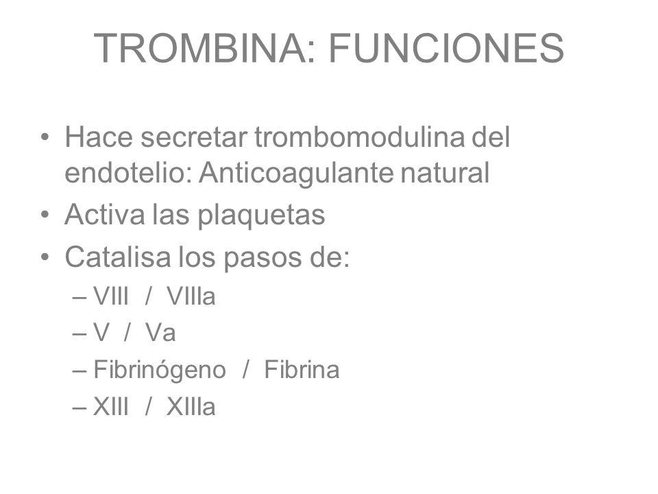 TROMBINA: FUNCIONES Hace secretar trombomodulina del endotelio: Anticoagulante natural. Activa las plaquetas.