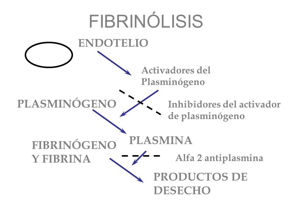 FIBRINÓLISIS ENDOTELIO PLASMINÓGENO PLASMINA FIBRINÓGENO Y FIBRINA