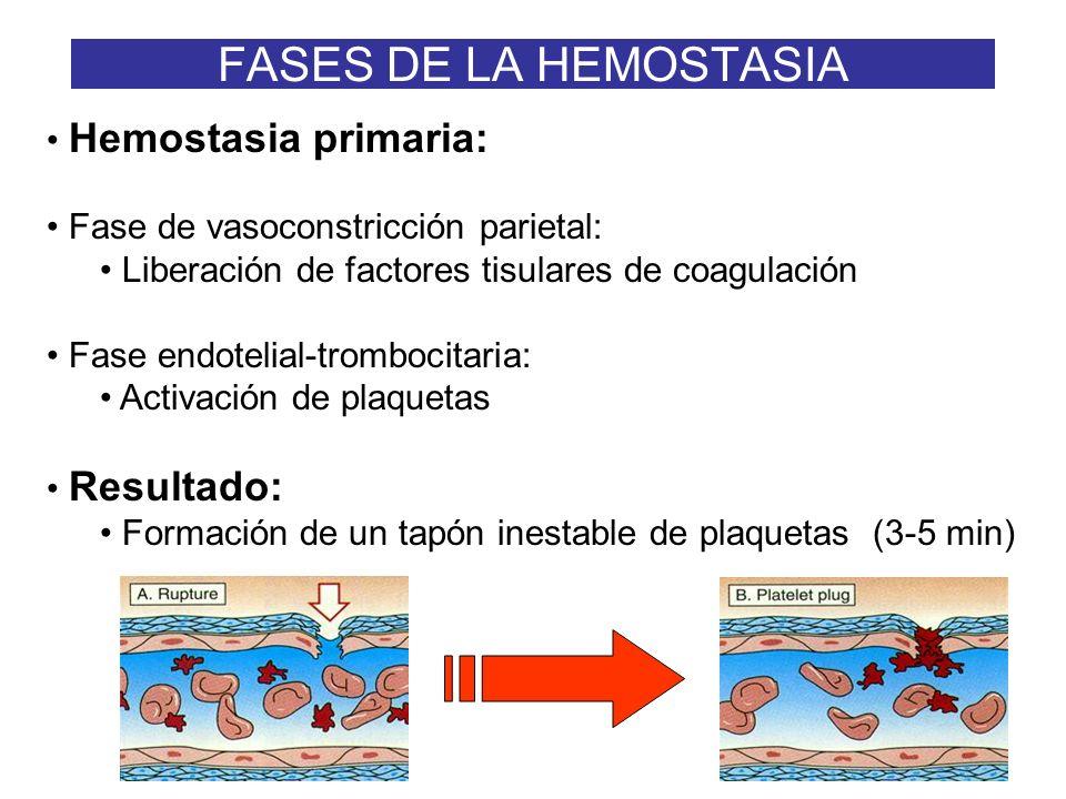 FASES DE LA HEMOSTASIA Hemostasia primaria: