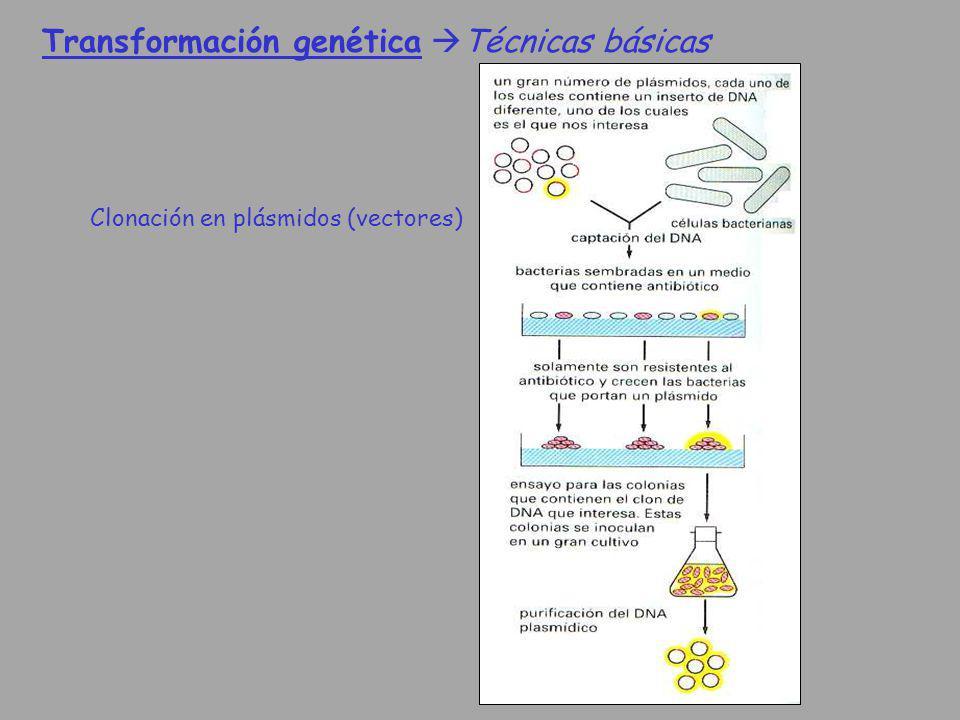 Transformación genética Técnicas básicas