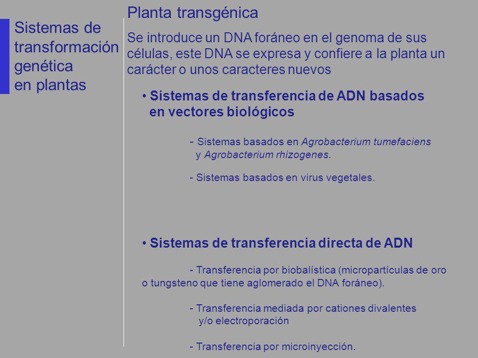 Sistemas de transformación genética en plantas