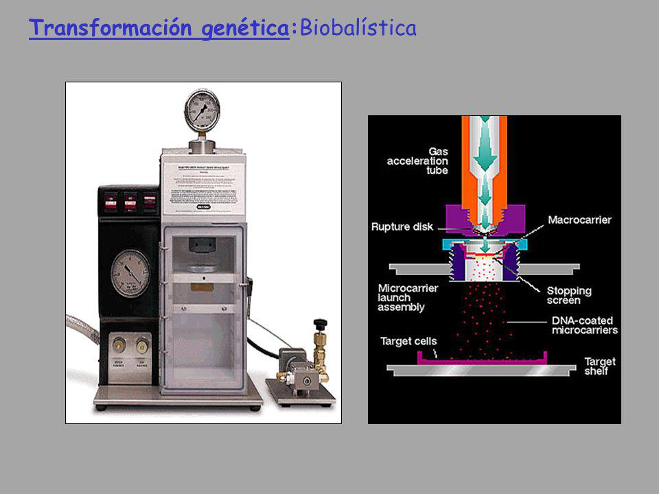 Transformación genética:Biobalística