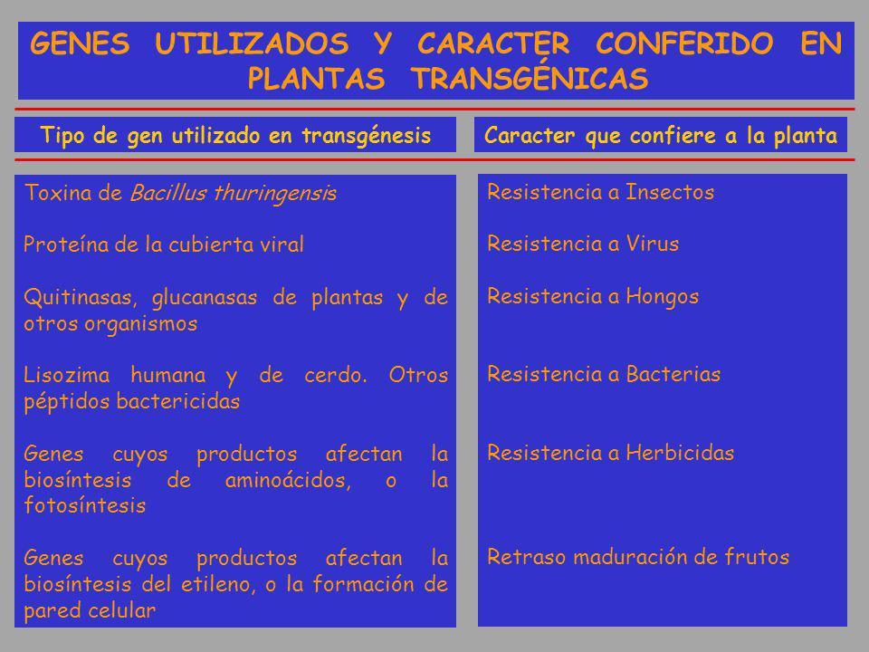 GENES UTILIZADOS Y CARACTER CONFERIDO EN PLANTAS TRANSGÉNICAS