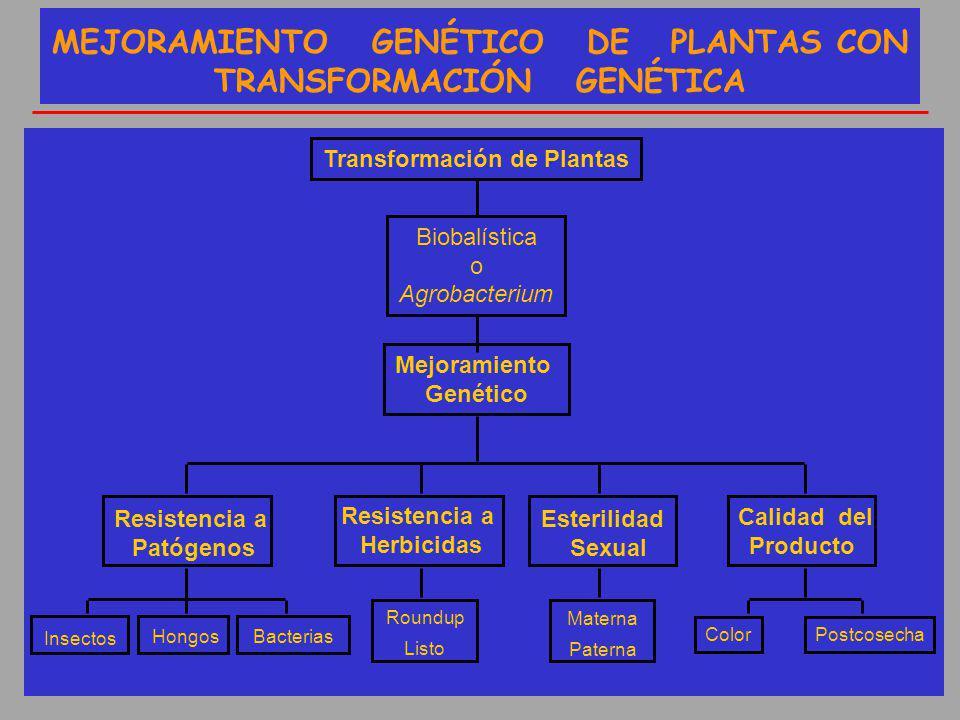 MEJORAMIENTO GENÉTICO DE PLANTAS CON TRANSFORMACIÓN GENÉTICA