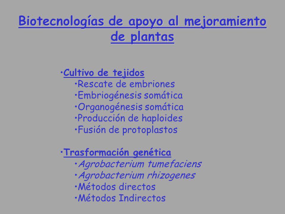 Biotecnologías de apoyo al mejoramiento de plantas