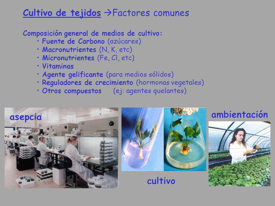 Cultivo de tejidos Factores comunes