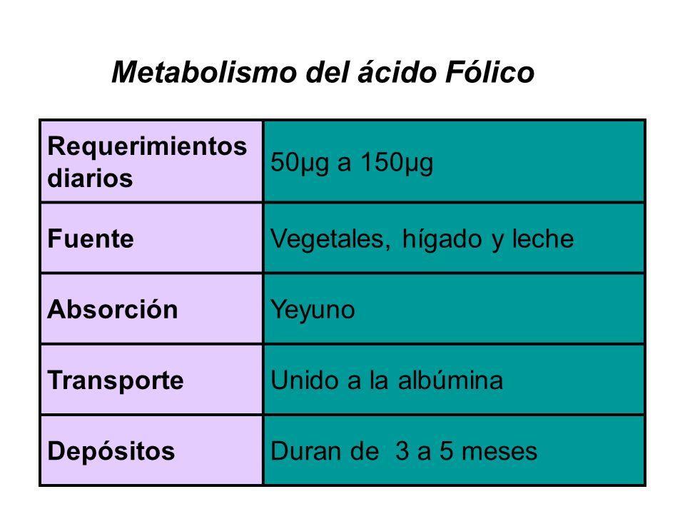 Metabolismo del ácido Fólico