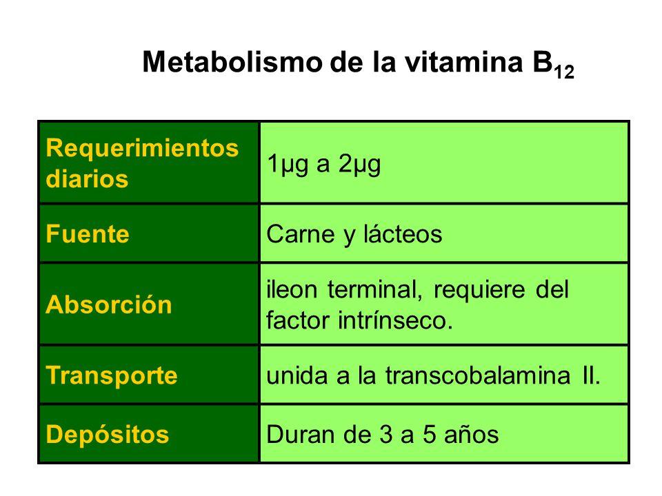 Metabolismo de la vitamina B12