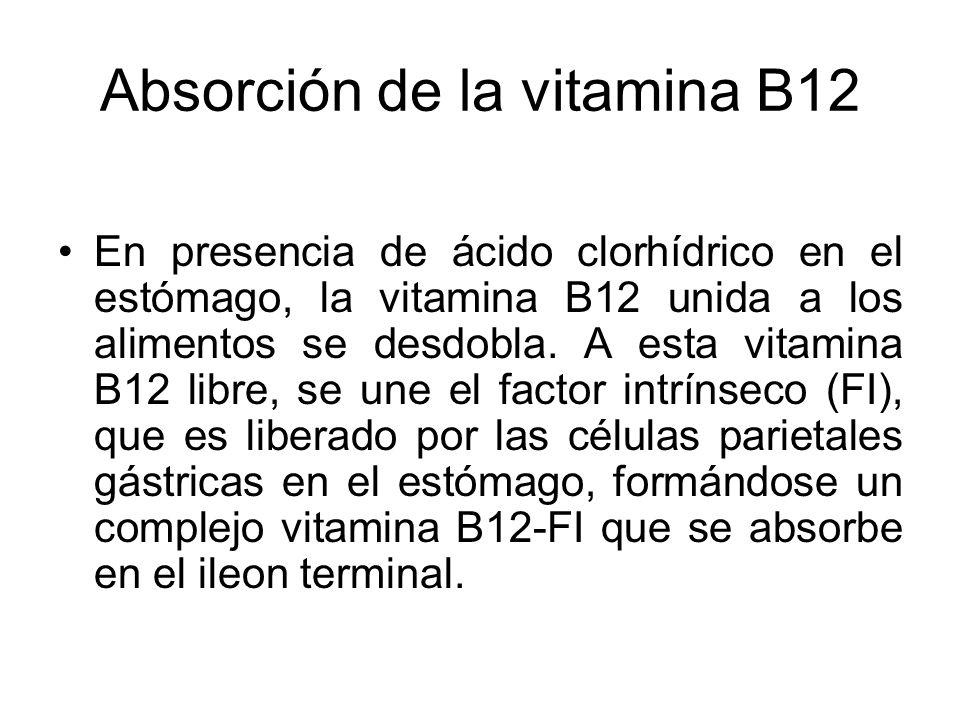 Absorción de la vitamina B12