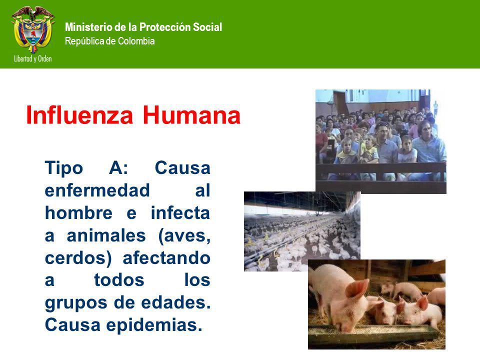 Influenza Humana Tipo A: Causa enfermedad al hombre e infecta a animales (aves, cerdos) afectando a todos los grupos de edades.