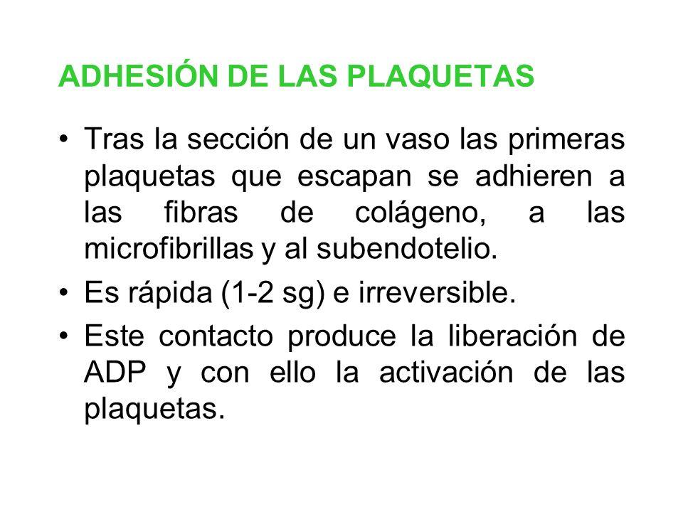 ADHESIÓN DE LAS PLAQUETAS