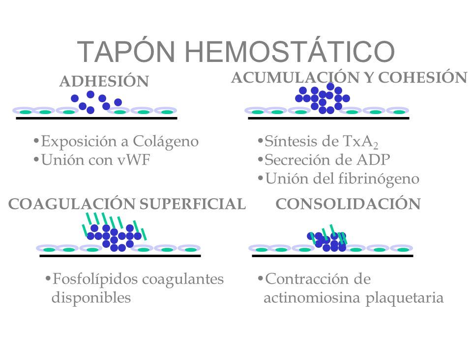 TAPÓN HEMOSTÁTICO ACUMULACIÓN Y COHESIÓN ADHESIÓN