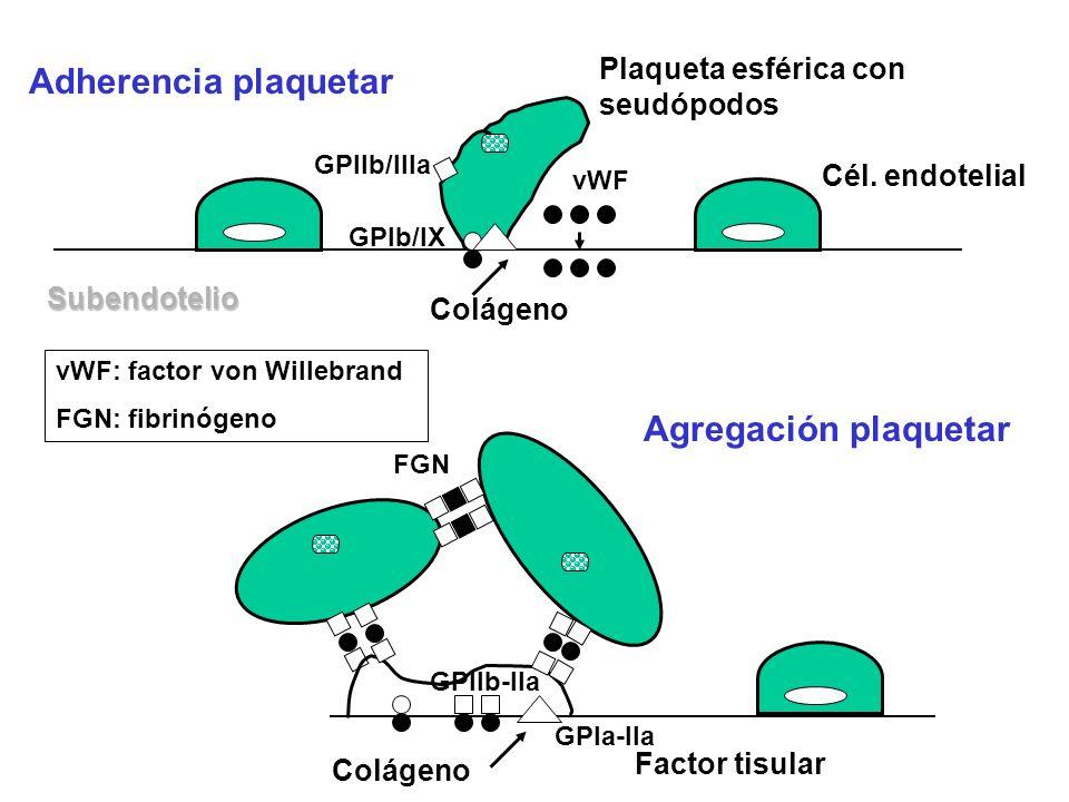 Adherencia plaquetar Agregación plaquetar