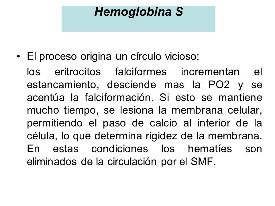 Hemoglobina S El proceso origina un círculo vicioso: