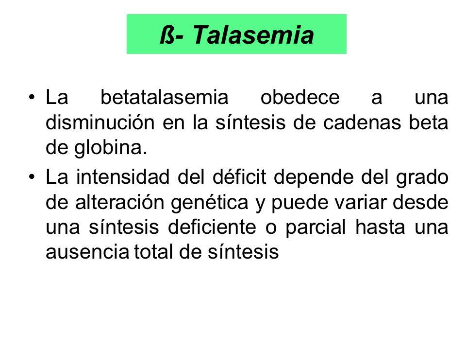ß- Talasemia La betatalasemia obedece a una disminución en la síntesis de cadenas beta de globina.