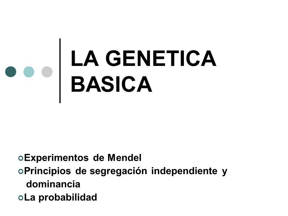 LA GENETICA BASICA Experimentos de Mendel