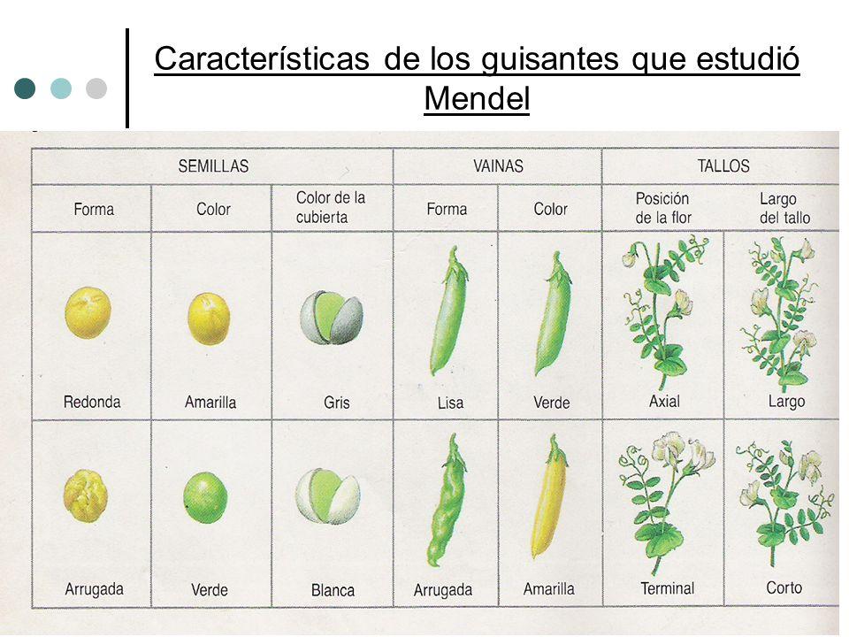 Características de los guisantes que estudió Mendel