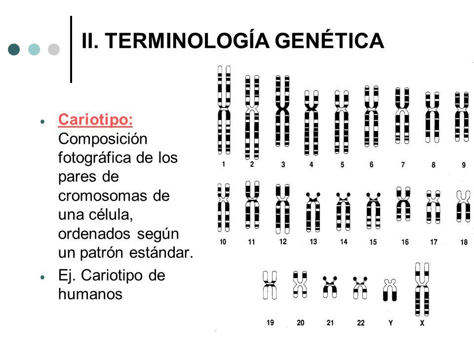 II. TERMINOLOGÍA GENÉTICA
