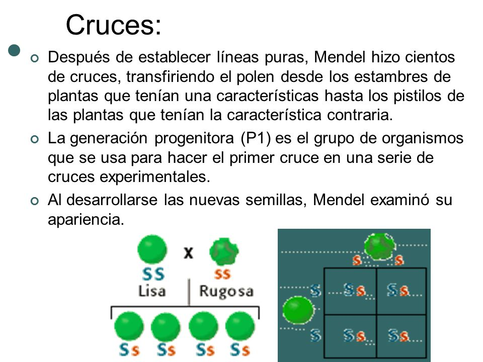 Cruces: