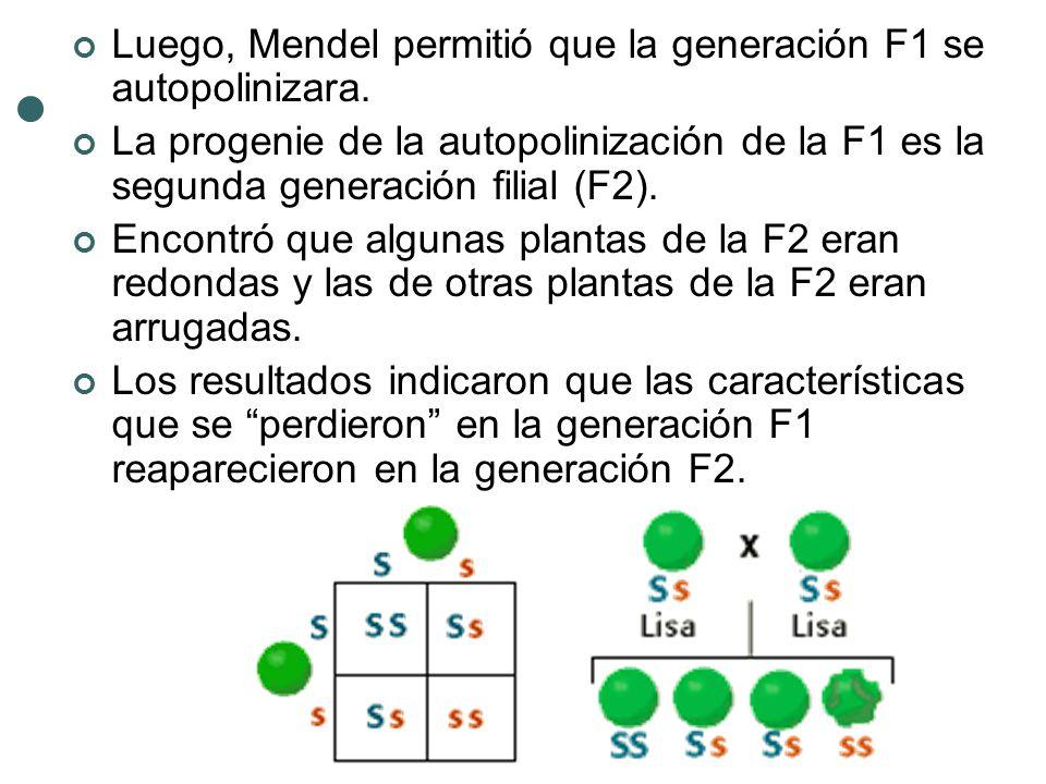 Luego, Mendel permitió que la generación F1 se autopolinizara.