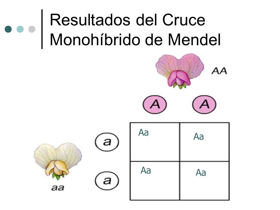 Resultados del Cruce Monohíbrido de Mendel