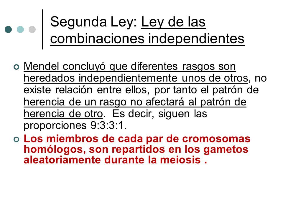 Segunda Ley: Ley de las combinaciones independientes