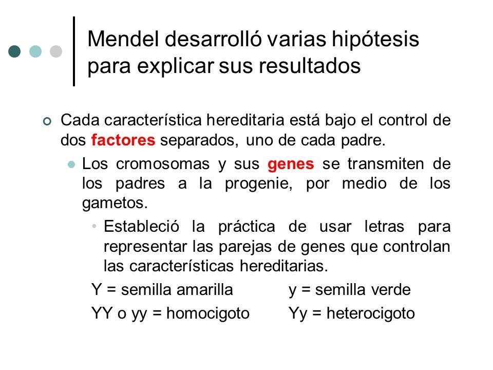 Mendel desarrolló varias hipótesis para explicar sus resultados